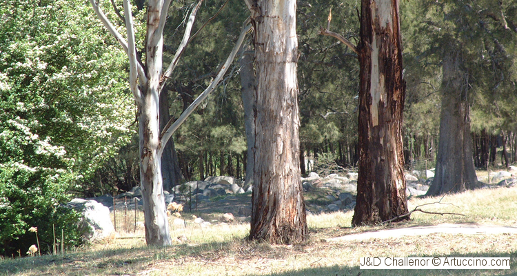 Glenroy Camping Ground